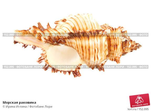 Морская раковина, фото № 152095, снято 17 декабря 2007 г. (c) Ирина Иглина / Фотобанк Лори