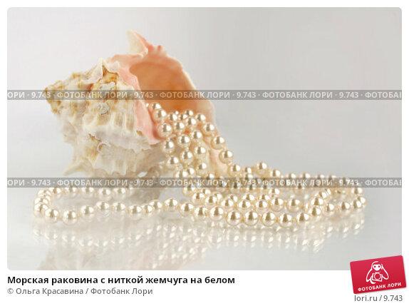 Морская раковина с ниткой жемчуга на белом, фото № 9743, снято 6 августа 2006 г. (c) Ольга Красавина / Фотобанк Лори