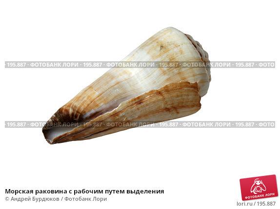 Морская раковина с рабочим путем выделения, фото № 195887, снято 31 января 2008 г. (c) Андрей Бурдюков / Фотобанк Лори