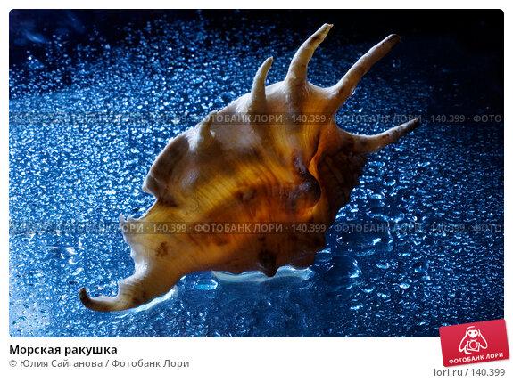 Морская ракушка, фото № 140399, снято 6 декабря 2007 г. (c) Юлия Сайганова / Фотобанк Лори