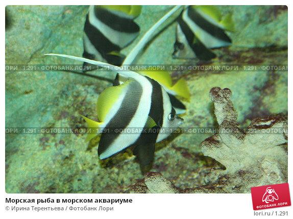 Морская рыба в морском аквариуме, эксклюзивное фото № 1291, снято 15 сентября 2005 г. (c) Ирина Терентьева / Фотобанк Лори