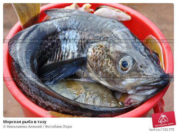 Купить «Морская рыба в тазу», фото № 133775, снято 16 июля 2006 г. (c) Николаенко Алексей / Фотобанк Лори