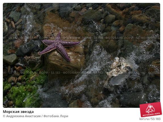 Купить «Морская звезда», фото № 53183, снято 16 сентября 2005 г. (c) Андрюхина Анастасия / Фотобанк Лори