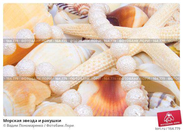 Морская звезда и ракушки, фото № 164779, снято 16 декабря 2007 г. (c) Вадим Пономаренко / Фотобанк Лори
