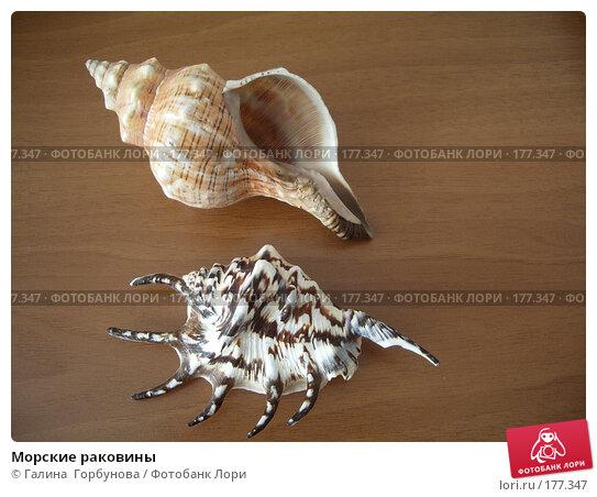 Морские раковины, фото № 177347, снято 27 августа 2006 г. (c) Галина  Горбунова / Фотобанк Лори