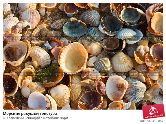 Морские ракушки текстура, фото № 310847, снято 13 августа 2004 г. (c) Кравецкий Геннадий / Фотобанк Лори