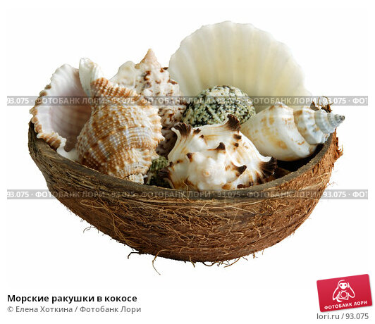 Морские ракушки в кокосе, фото № 93075, снято 29 мая 2017 г. (c) Елена Хоткина / Фотобанк Лори