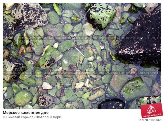Купить «Морское каменное дно», фото № 148063, снято 21 ноября 2007 г. (c) Николай Коржов / Фотобанк Лори