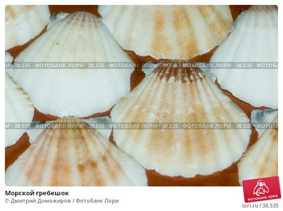 Купить «Морской гребешок», фото № 38535, снято 11 марта 2007 г. (c) Дмитрий Доможиров / Фотобанк Лори