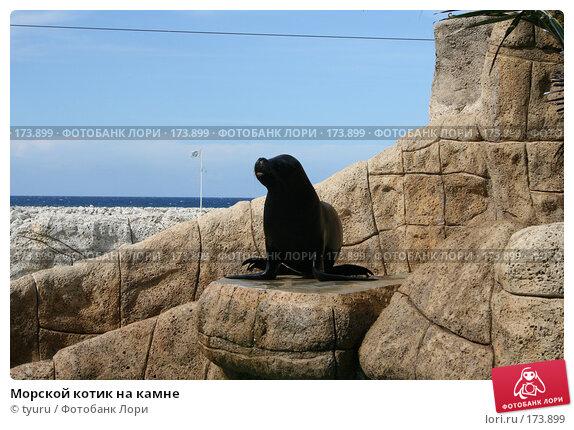 Морской котик на камне, фото № 173899, снято 9 июня 2007 г. (c) tyuru / Фотобанк Лори
