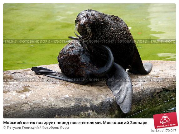 Морской котик позирует перед посетителями. Московский Зоопарк, фото № 170047, снято 24 июня 2007 г. (c) Петухов Геннадий / Фотобанк Лори