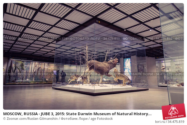 MOSCOW, RUSSIA - JUBE 3, 2015: State Darwin Museum of Natural History... Стоковое фото, фотограф Zoonar.com/Ruslan Gilmanshin / age Fotostock / Фотобанк Лори