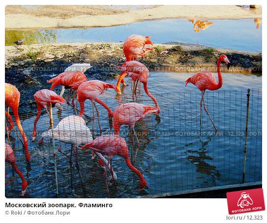 Московский зоопарк. Фламинго, фото № 12323, снято 24 сентября 2006 г. (c) Roki / Фотобанк Лори