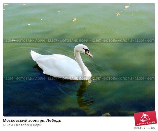 Московский зоопарк. Лебедь, фото № 12307, снято 24 сентября 2006 г. (c) Roki / Фотобанк Лори