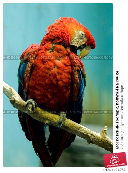 Московский зоопарк, попугай на сучке, фото № 101787, снято 1 января 2007 г. (c) Александр Чураков / Фотобанк Лори