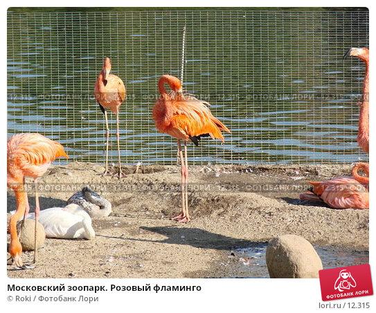 Купить «Московский зоопарк. Розовый фламинго», фото № 12315, снято 24 сентября 2006 г. (c) Roki / Фотобанк Лори