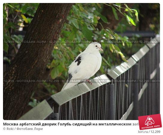 Купить «Москва арбатский дворик Голубь сидящий на металлическом заборе», фото № 12299, снято 16 сентября 2006 г. (c) Roki / Фотобанк Лори