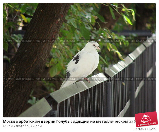 Москва арбатский дворик Голубь сидящий на металлическом заборе, фото № 12299, снято 16 сентября 2006 г. (c) Roki / Фотобанк Лори
