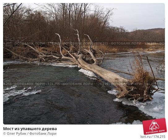 Мост из упавшего дерева, фото № 174215, снято 17 ноября 2007 г. (c) Олег Рубик / Фотобанк Лори