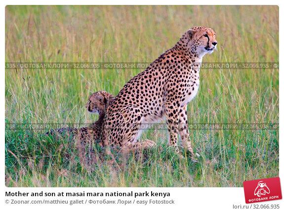 Mother and son at masai mara national park kenya. Стоковое фото, фотограф Zoonar.com/matthieu gallet / easy Fotostock / Фотобанк Лори