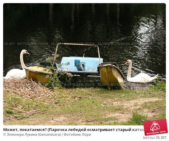Может, покатаемся? (Парочка лебедей осматривает старый катамаран на берегу пруда), фото № 35307, снято 27 марта 2017 г. (c) Элеонора Лукина (GenuineLera) / Фотобанк Лори