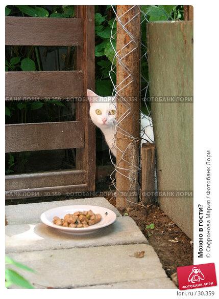 Купить «Можно в гости?», фото № 30359, снято 23 июля 2005 г. (c) Сафронова Мария / Фотобанк Лори
