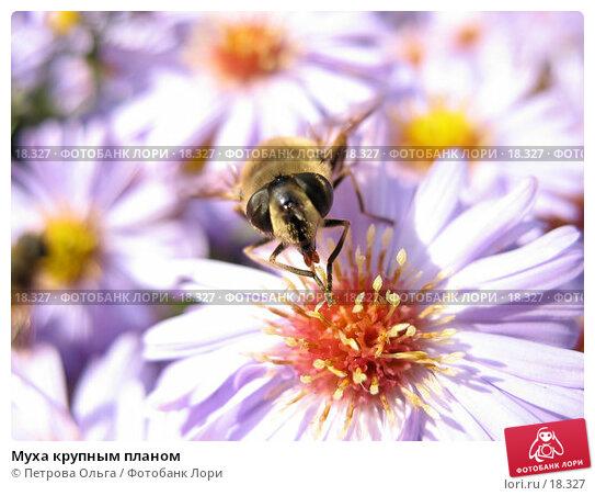 Муха крупным планом, фото № 18327, снято 12 октября 2006 г. (c) Петрова Ольга / Фотобанк Лори