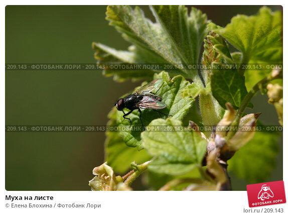 Купить «Муха на листе», фото № 209143, снято 10 мая 2007 г. (c) Елена Блохина / Фотобанк Лори