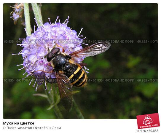 Муха на цветке, фото № 60835, снято 3 сентября 2005 г. (c) Павел Филатов / Фотобанк Лори