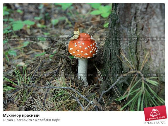 Мухомор красный, фото № 68779, снято 4 августа 2007 г. (c) Ivan I. Karpovich / Фотобанк Лори