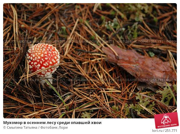 Мухомор в осеннем лесу среди опавшей хвои, фото № 251771, снято 1 октября 2006 г. (c) Смыгина Татьяна / Фотобанк Лори