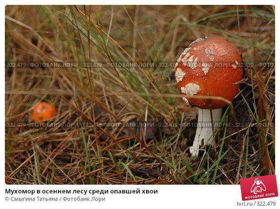 Купить «Мухомор в осеннем лесу среди опавшей хвои», фото № 322479, снято 1 октября 2006 г. (c) Смыгина Татьяна / Фотобанк Лори