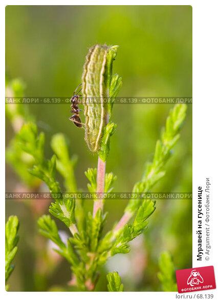 Муравей на гусенице, фото № 68139, снято 10 июня 2007 г. (c) Argument / Фотобанк Лори