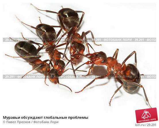 Муравьи обсуждают глобальные проблемы, фото № 29291, снято 1 апреля 2007 г. (c) Павел Преснов / Фотобанк Лори