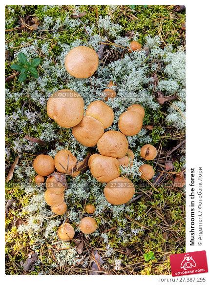 Купить «Mushrooms in the forest», фото № 27387295, снято 6 сентября 2014 г. (c) Argument / Фотобанк Лори