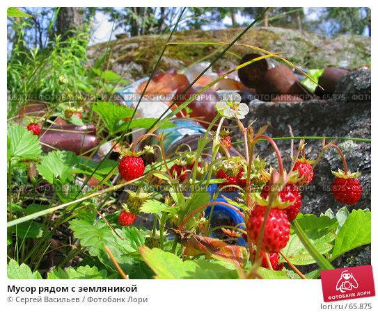 Мусор рядом с земляникой, фото № 65875, снято 7 июля 2007 г. (c) Сергей Васильев / Фотобанк Лори