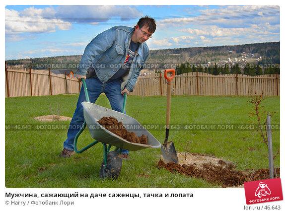 Купить «Мужчина, сажающий на даче саженцы, тачка и лопата», фото № 46643, снято 13 июня 2005 г. (c) Harry / Фотобанк Лори