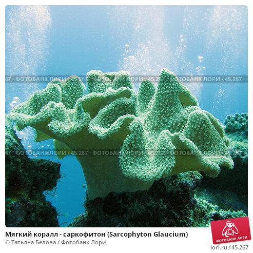 Мягкий коралл - саркофитон (Sarcophyton Glaucium), фото № 45267, снято 21 ноября 2006 г. (c) Татьяна Белова / Фотобанк Лори