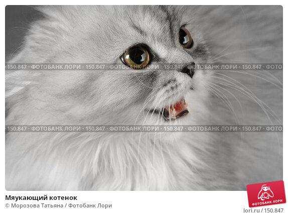 Купить «Мяукающий котенок», фото № 150847, снято 23 марта 2018 г. (c) Морозова Татьяна / Фотобанк Лори