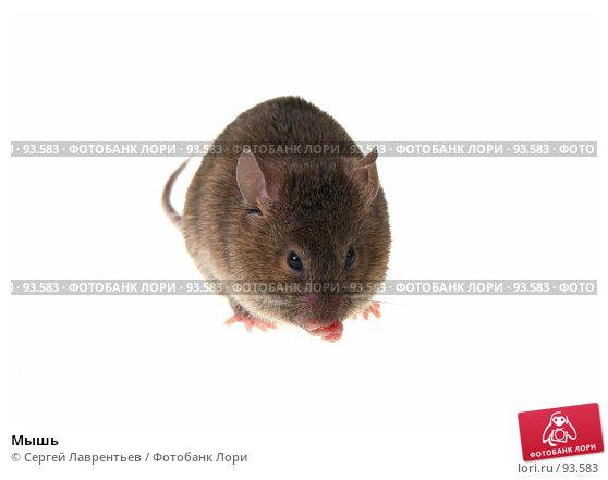 Мышь, фото № 93583, снято 23 сентября 2007 г. (c) Сергей Лаврентьев / Фотобанк Лори
