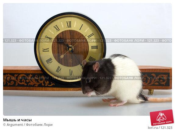 Мышь и часы, фото № 121323, снято 18 ноября 2007 г. (c) Argument / Фотобанк Лори