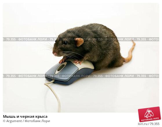 Купить «Мышь и черная крыса», фото № 79355, снято 2 сентября 2007 г. (c) Argument / Фотобанк Лори