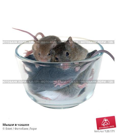 Купить «Мыши в чашке», фото № 120171, снято 22 ноября 2017 г. (c) Estet / Фотобанк Лори