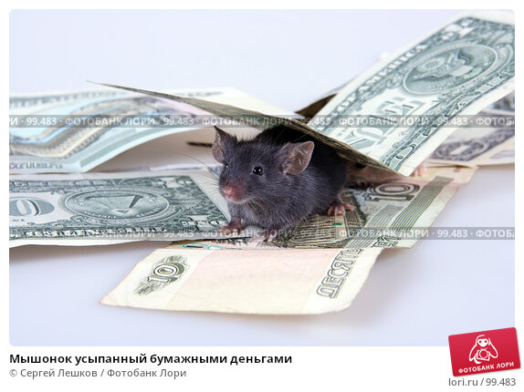 Мышонок усыпанный бумажными деньгами, фото № 99483, снято 9 декабря 2016 г. (c) Сергей Лешков / Фотобанк Лори