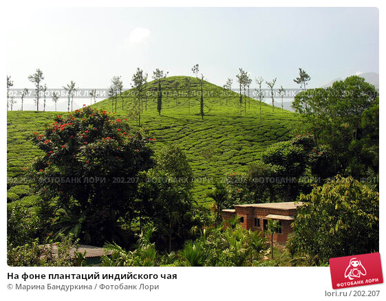 На фоне плантаций индийского чая, фото № 202207, снято 16 ноября 2005 г. (c) Марина Бандуркина / Фотобанк Лори