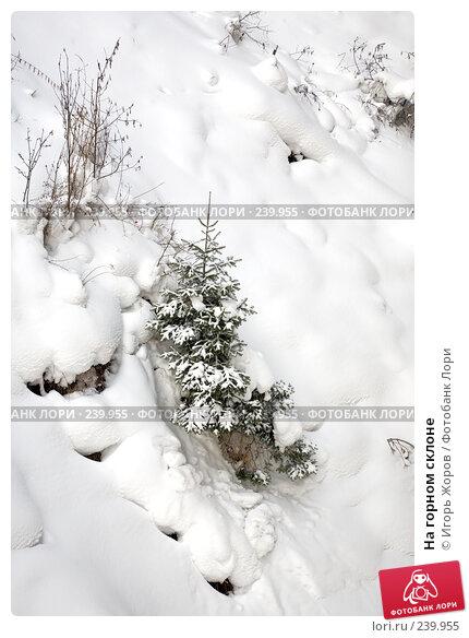 Купить «На горном склоне», фото № 239955, снято 10 февраля 2008 г. (c) Игорь Жоров / Фотобанк Лори