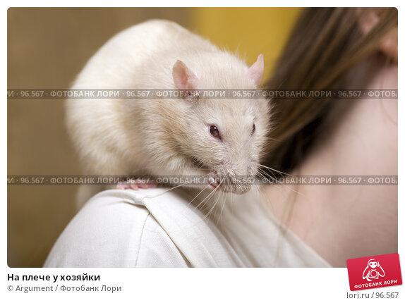 На плече у хозяйки, фото № 96567, снято 7 октября 2007 г. (c) Argument / Фотобанк Лори