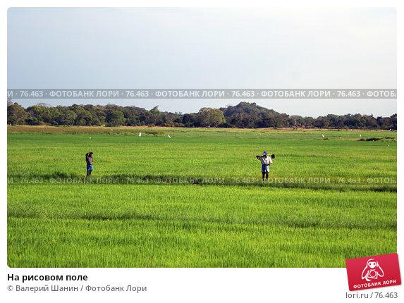 На рисовом поле, фото № 76463, снято 5 июня 2007 г. (c) Валерий Шанин / Фотобанк Лори