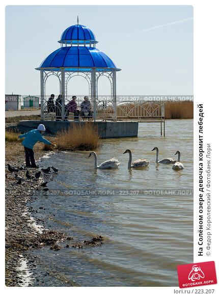 На Солёном озере девочка кормит лебедей, фото № 223207, снято 12 марта 2008 г. (c) Федор Королевский / Фотобанк Лори