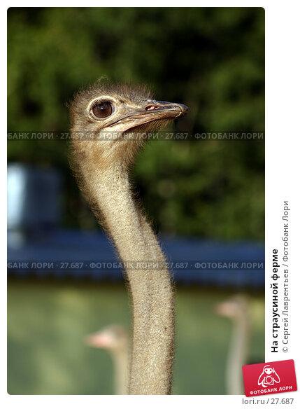 Купить «На страусиной ферме», фото № 27687, снято 23 июля 2006 г. (c) Сергей Лаврентьев / Фотобанк Лори
